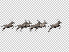 Oryx Group 02 - 3d Motion Graphics - stock footage