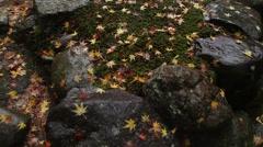 Fallen leaves. Stock Footage
