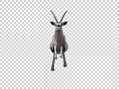 Oryx Jump Front 11 -  3d Motion Graphics Stock Footage