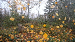 Unusual autumn motif 1 - stock footage