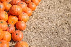 Pumpkin in a field background for fall, autumn, halloween Stock Photos