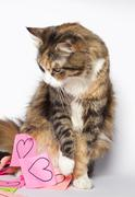 Kitten looking at post-its with drawn hearts Stock Photos