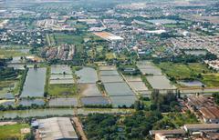 Bird's-eye view on  rice fields bangkok vicinity Stock Photos