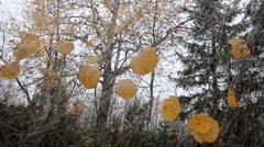 Unusual autumn motif 2 Stock Footage