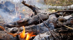Exclusive food game bird on a spit Stock Footage