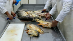 Cleaning fish carp Stock Footage