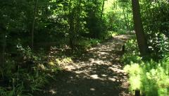 Footpath in deciduous forest - pan Stock Footage