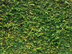 Green creeper leaves Stock Photos