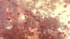 Autumn Flying Leafs - stock footage