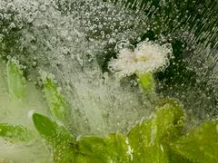 Flower in the water and bubbles Kuvituskuvat