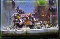 marine aquarium - stock photo
