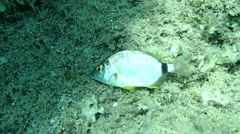 Small fish dying Stock Footage