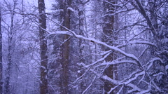 Winter Snow In The Woods Background - stock footage