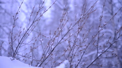 Winter Snow Closeup on Small Branches - stock footage