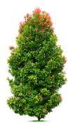 Ornamental tree Stock Photos
