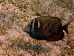 Brown fish Stock Photos