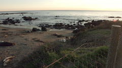 Seals on California Beach at San Simeon Stock Footage