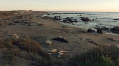 California Seal on Beach at San Simeon Stock Footage