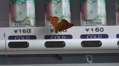 Orange Japanese Butterfly : Moth On Button Of Vending Machine 4K Stock Footage