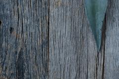 Aloe vera leaves on wood background Stock Photos