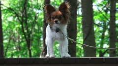 Small Puppy Dog On Bench In Green Forest 4K Stock Footage