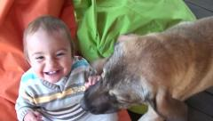 Two huge dogs attack licking a happy child Stock Footage