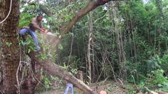 Milling Jungle Trees on Micronesian Island of Yap Stock Footage