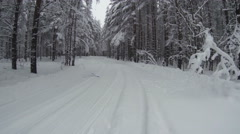 Time lapse of driving through the winter evergreen forest with snowy pines Stock Footage