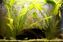 Aquarium Stock Photos