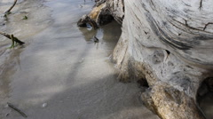 River bank with roots 10584 - stock footage