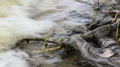 River bank with roots 10574 - stock footage