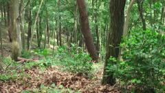 Zoom Out Green Forest Trees Branchs And Leaves 4K Stock Footage