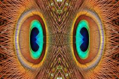 Abstract peacock feathers pattern Stock Photos