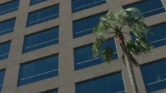 ESTABLISHING SHOT OFFICE BUILDING EXTERIOR.  PALM TREE BLOWING IN THE WIND. Stock Footage