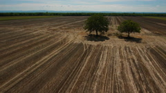 Prairie farmland aerial shot  two trees high fly bye Stock Footage