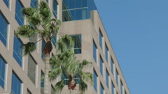 ESTABLISHING SHOT OF OFFICE BUILDING CORNER EXTERIOR . PALM TREES BLOWING. I Stock Footage