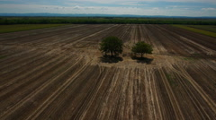 Prairie farmland aerial shot with two trees Stock Footage