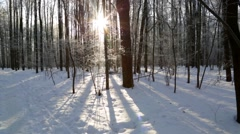 Winter forest, lit by the sun Stock Footage