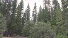 Sheer wall in Yosemite Stock Footage