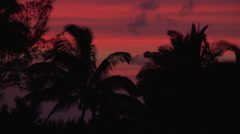 Sunset Palm Trees With Natural Color Stock Footage
