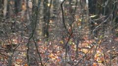 Cobwebs on the forest Stock Footage