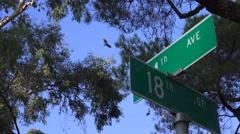 City Vultures, buzzards Stock Footage