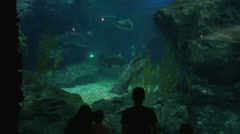 Tourist standing in front of big tank of tropical fish and corals under water Stock Footage