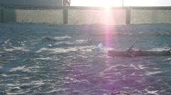 Seagul/Seabird beach chase slow Stock Footage