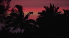Hawaii Palm Tree Sunset Time-Lapse Stock Footage
