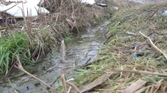 Clean Stream flows in the dry grass, HD Stock Footage