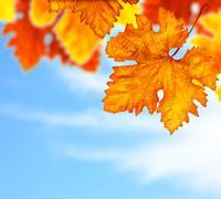 Beautiful autumn tree leaves background border Stock Photos