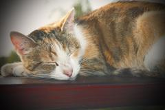 lazy cat sleeping on wooden balustrade, with instagram effect - stock photo