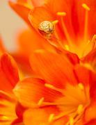 Little snail on red crocus flower Kuvituskuvat