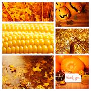 Autumn season collage Stock Photos